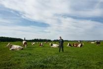 L'élevage se compose de 30 vaches laitières ; elles sont mises au près, tous les jours.