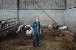 Il y a un an, ils ont développé l'élevage de porcs pour en vendre la viande. Elevés dans les mêmes conditions bio, leur viande est réputée.