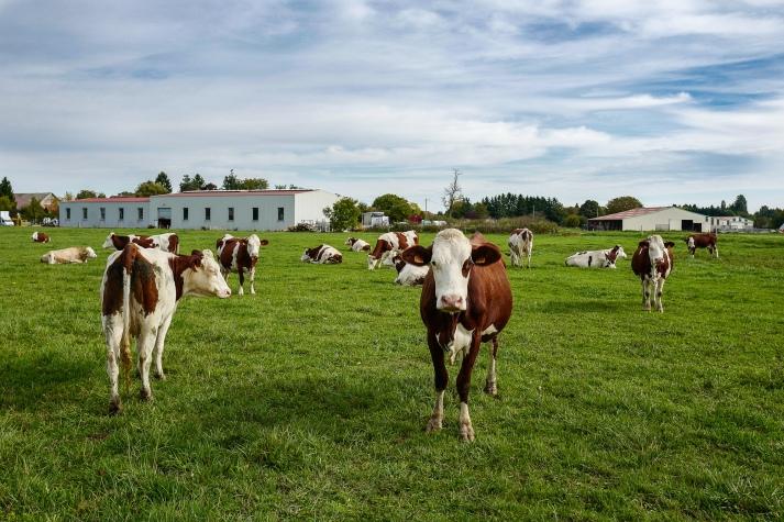 Ces artisans du lait dans le Jura